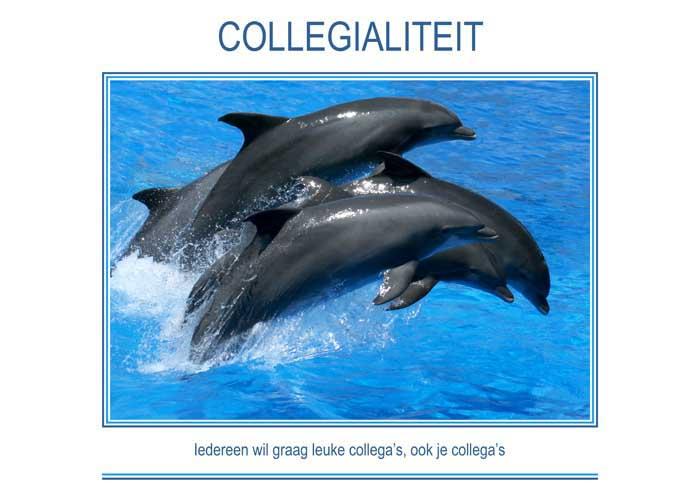 spreuken over collegialiteit Motivatie & Inspiratie posters, canvasschilderij, ook ingelijst  spreuken over collegialiteit